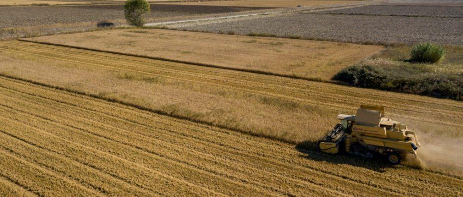 European Rice programme: Creating content